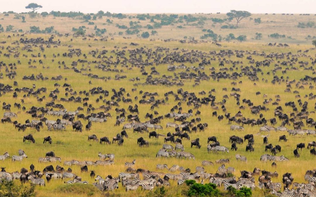 Ultimate guide for your trip to Tanzania